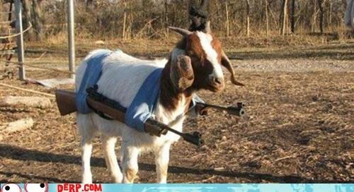 animals,attack,best of week,goat,guns,wtf