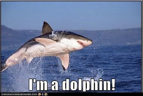 dolphin,fish,fun,happy,jumping,pretending,shark