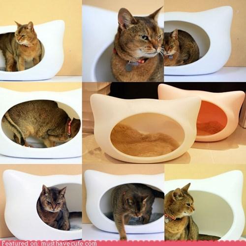 Cat in a Cat Cat Bed