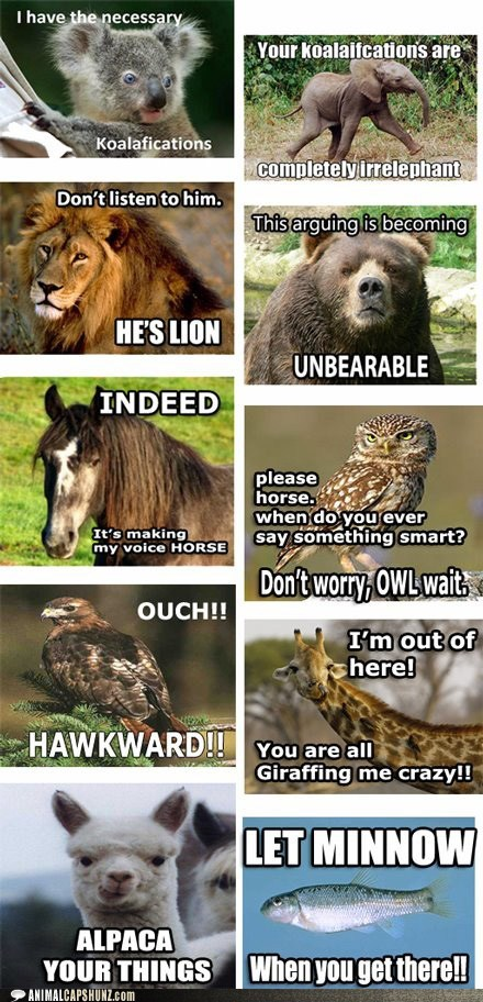 all the things,alpaca,argument,bear,best of the week,elephant,everything,fish,giraffes,Hall of Fame,hawk,horse,koala,lion,minnow,names,Owl,puns,response