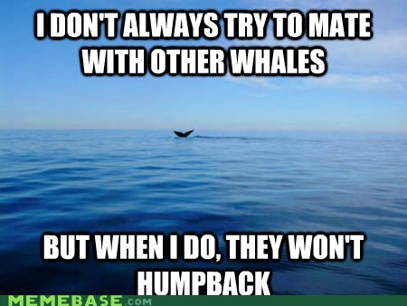 The Problem with Sperm Whales