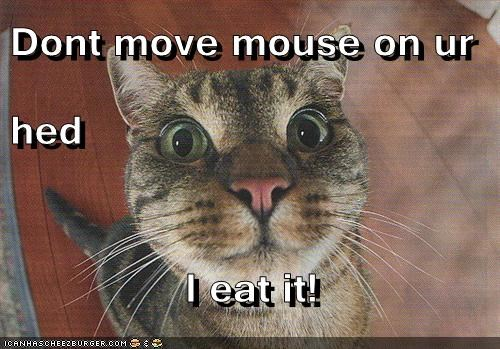 Dont move mouse on ur hed  I eat it!