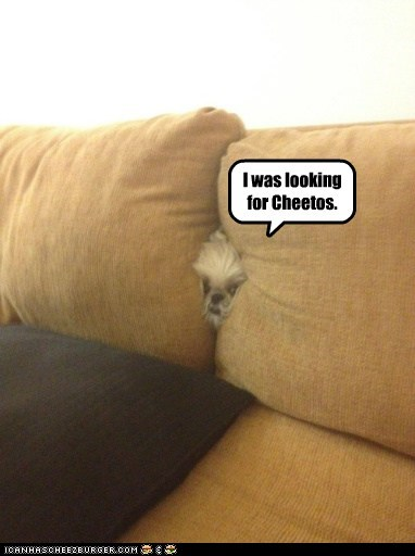 I Has A Hotdog: Couch Diving