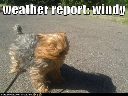 weather report: windy
