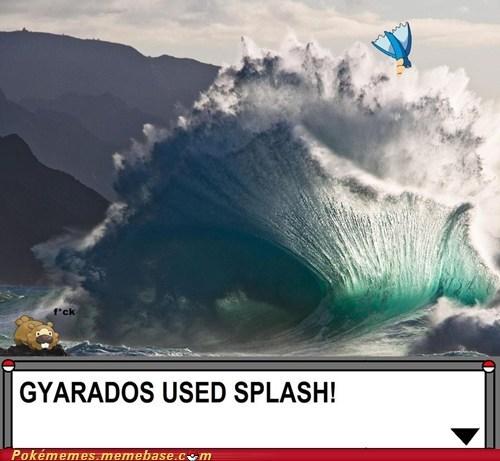 bidoof,gyarados,splash,the internets,underrated
