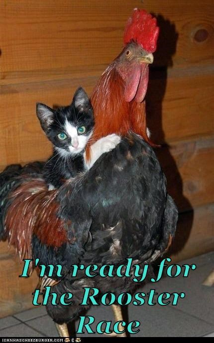 I'm ready for the Rooster Race