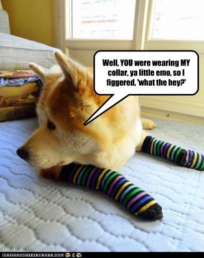 dogs,emo,fashion,shiba inu,socks