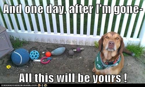 dogs,one day son,toys,what breed