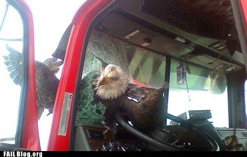 eagle,smash,truck,window