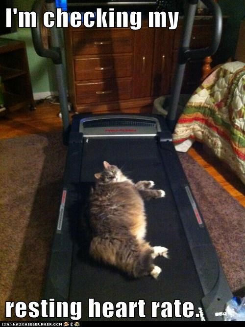 Cats,exercise,heart rate,medical,resting,treadmill