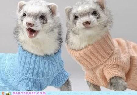 Ferrets in Sweaters