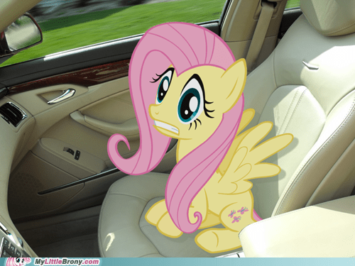 Buckle up Fluttershy
