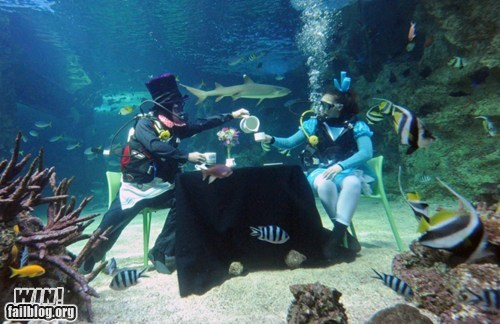 aquarium,classy,scuba diving,tea party,tea time