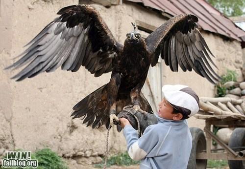 Training an Eagle WIN