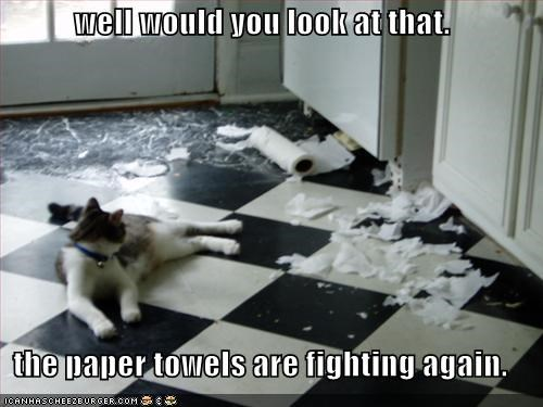 fighting,lolcats,towels