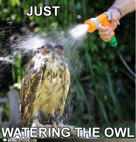 angry,annoyed,birds,hose,i-dont-like-you,Owl,owls,plants,Stupid Human Trick,watering,wet