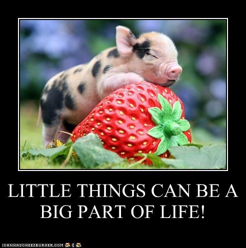 LITTLE THINGS CAN BE A BIG PART OF LIFE!