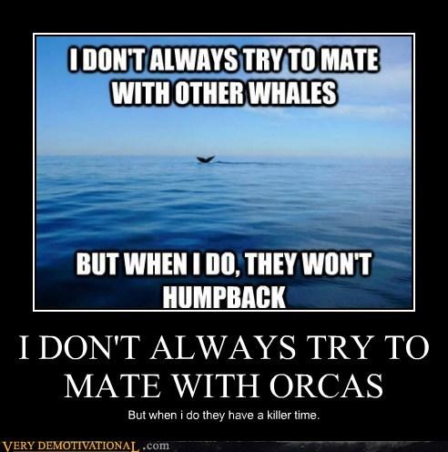 hilarious,killer time,killer whale,orcas,pun
