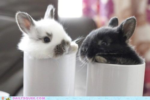 bunnies,coffee,cream,cups,happy bunday,mugs,squee