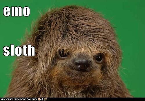emo sloth