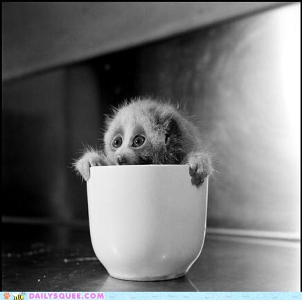 Daily Squee: Squee Spree - Cup of Loris