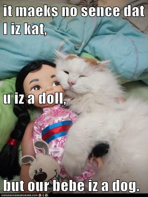 it maeks no sence dat I iz kat,  u iz a doll, but our bebe iz a dog.