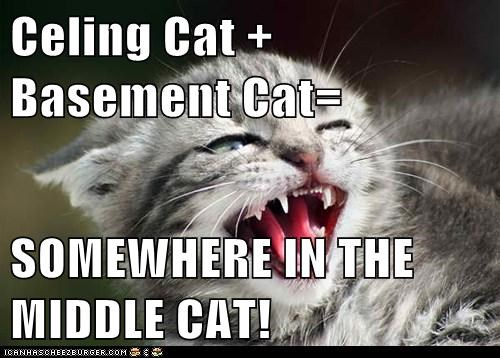 Celing Cat + Basement Cat=  SOMEWHERE IN THE MIDDLE CAT!