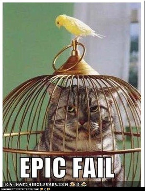 This is what the cat gets for taking away the bird's taco.