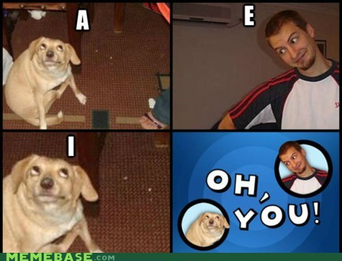 dogs,Memes,Oh,vowels,you
