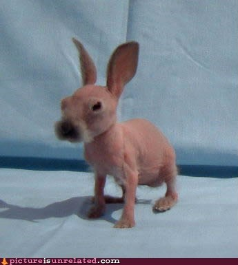Shave the Rabbit, They Said. It'll Be Cute, They Said