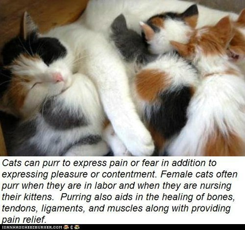 Fun Cat Facts #91