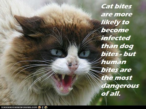 Fun Cat Facts #95