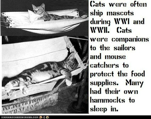 Fun Cat Facts #97