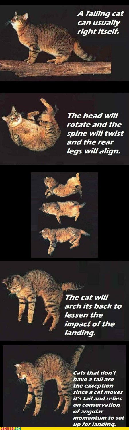 Fun Cat Facts #98