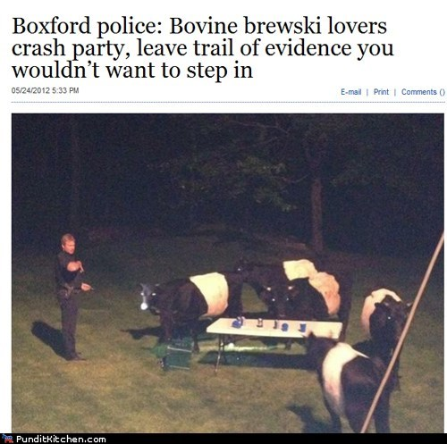 beer,boston,cows,police,political pictures