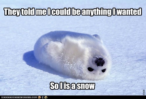 baby,cute,Hall of Fame,harp seal,harp seals,seals,snow,they told me i could be a,they told me i could be anything,white