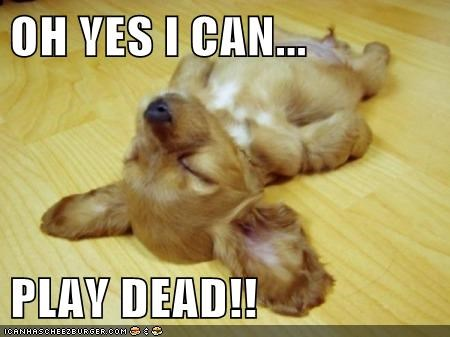 OH YES I CAN...  PLAY DEAD!!