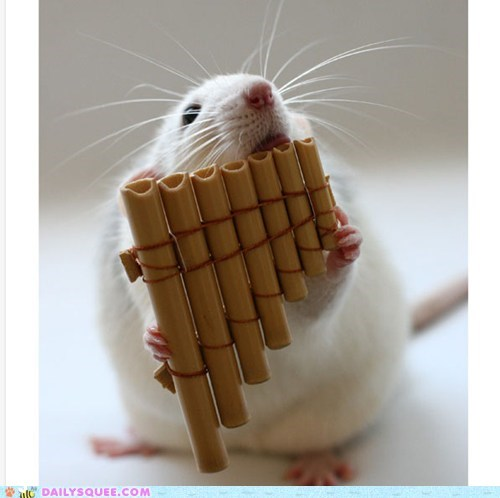 Daily Squee: Musical Rat