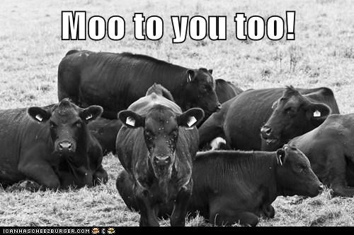 Moo to you too!