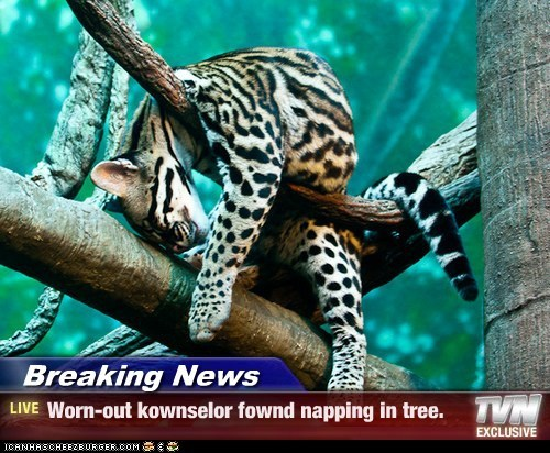 Breaking News - Worn-out kownselor fownd napping in tree.