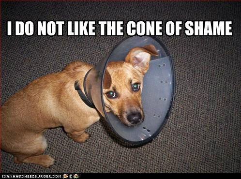 I Has A Hotdog: CONE OF SHAME