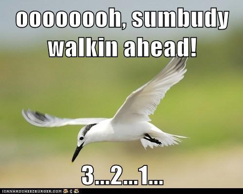 ahead,bird,countdown,perfected,poop,seagull,Target,timing