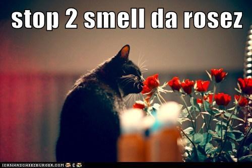 stop 2 smell da rosez