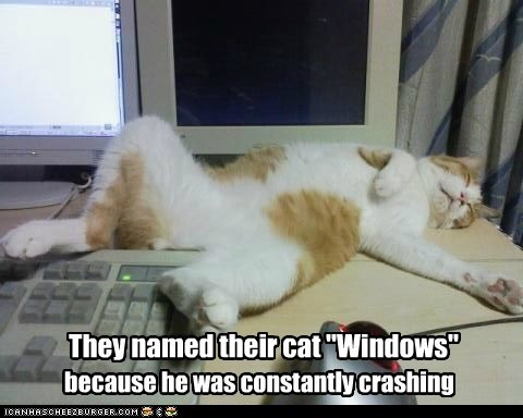 "Lolcats: They named their cat ""Windows"""