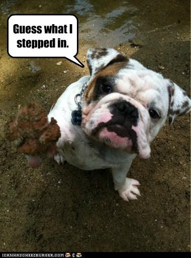 bulldog,dogs,guess what,mud,poop
