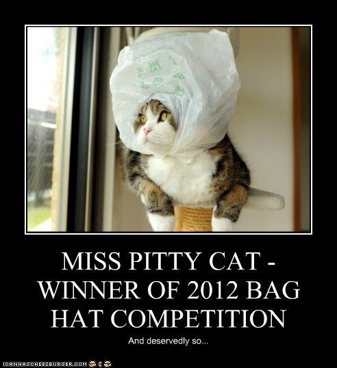 MISS PITTY CAT - WINNER OF 2012 BAG HAT COMPETITION
