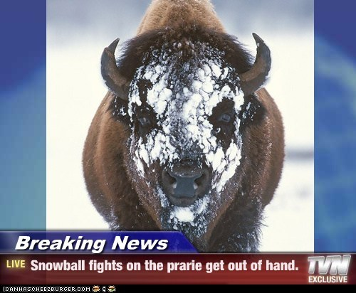 Breaking News - Snowball fights on the prarie get out of hand.