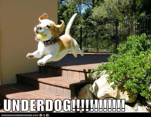 beagle,dogs,flying,tennis ball,underdog