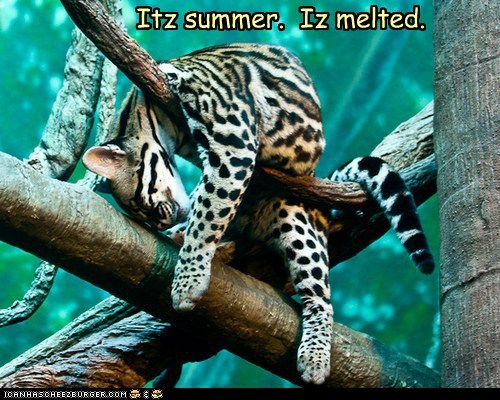 What, You've Never Seen a Melted Cat Before?