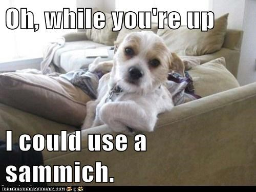 couch,dogs,food,sandwich,terrier